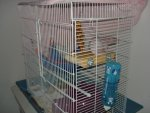 side new cage.jpg