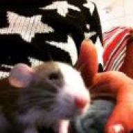 Pee Rock Garden Experiment Rat Forum